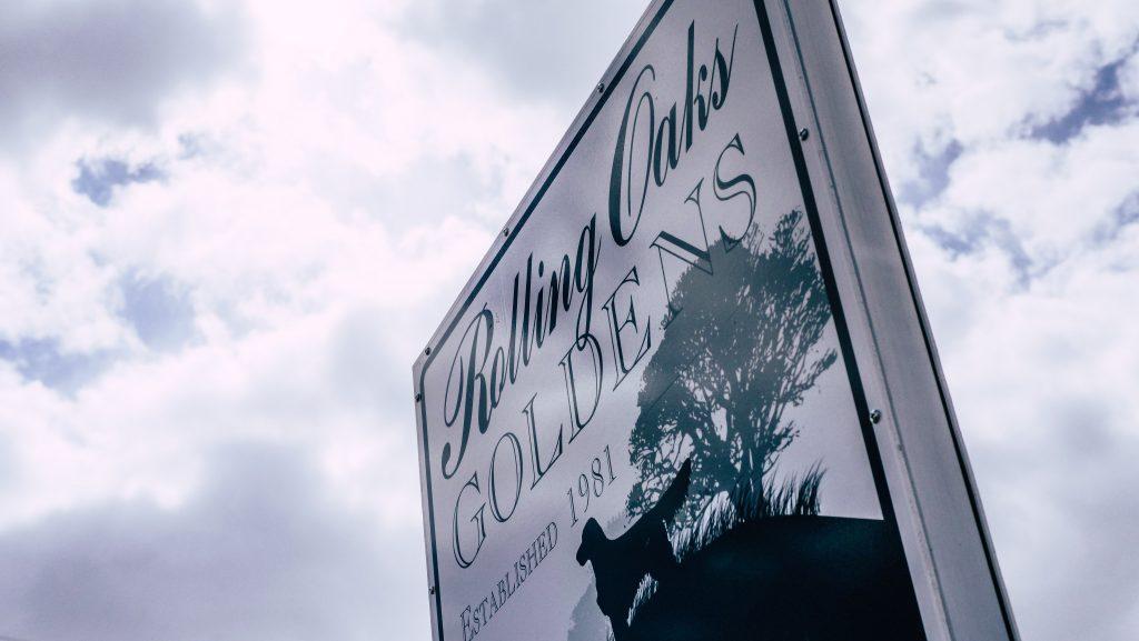 Rolling Oaks Goldens